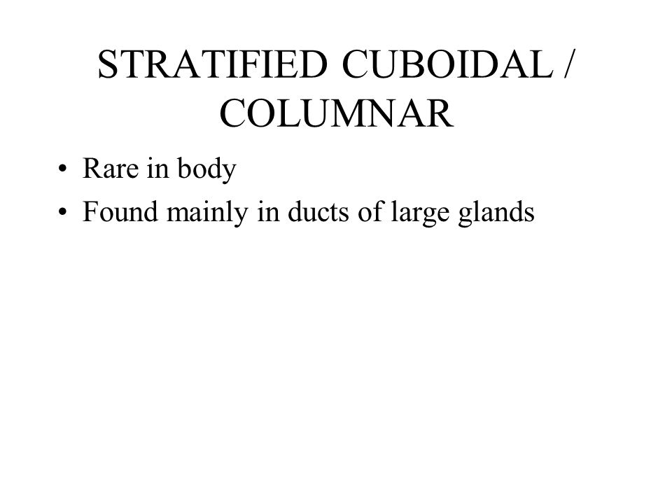 STRATIFIED CUBOIDAL / COLUMNAR Rare in body Found mainly in ducts of large glands