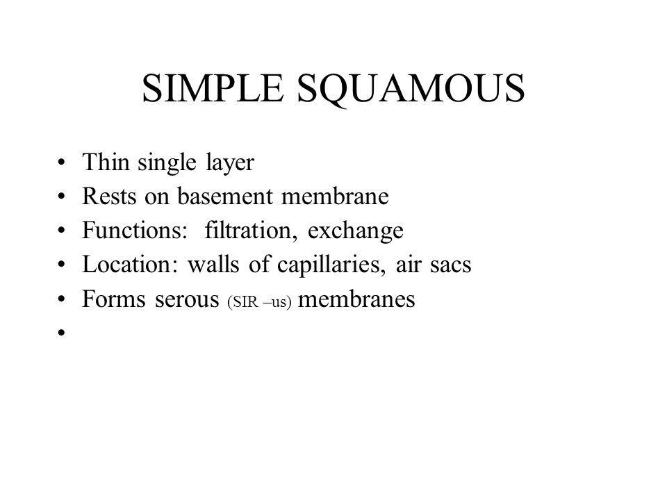 SIMPLE SQUAMOUS Thin single layer Rests on basement membrane Functions: filtration, exchange Location: walls of capillaries, air sacs Forms serous (SIR –us) membranes