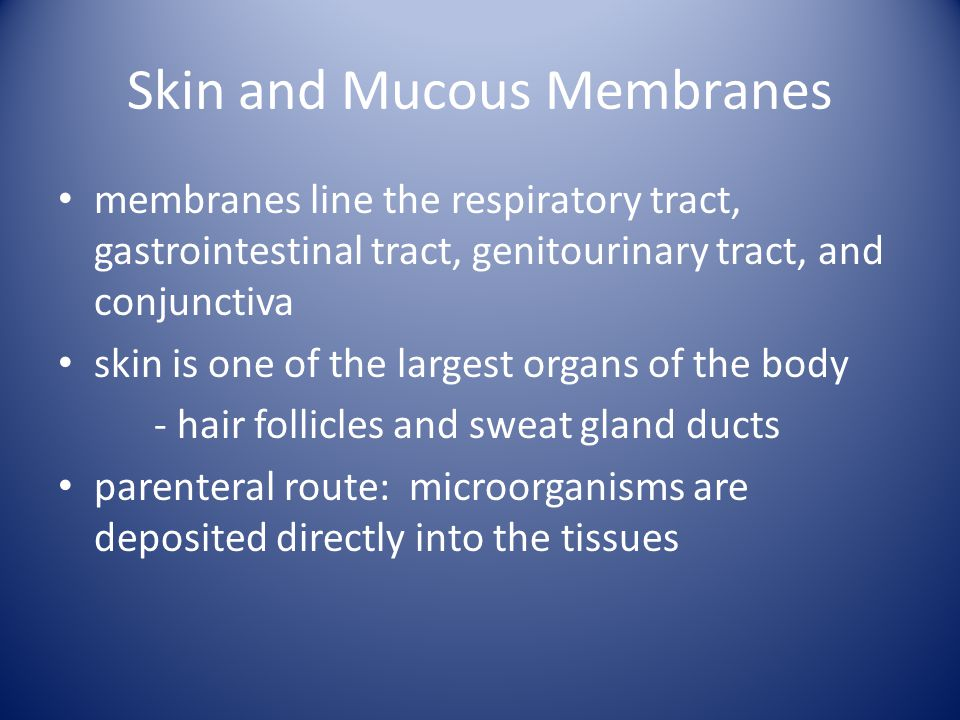 Skin and Mucous Membranes membranes line the respiratory tract, gastrointestinal tract, genitourinary tract, and conjunctiva skin is one of the largest organs of the body - hair follicles and sweat gland ducts parenteral route: microorganisms are deposited directly into the tissues