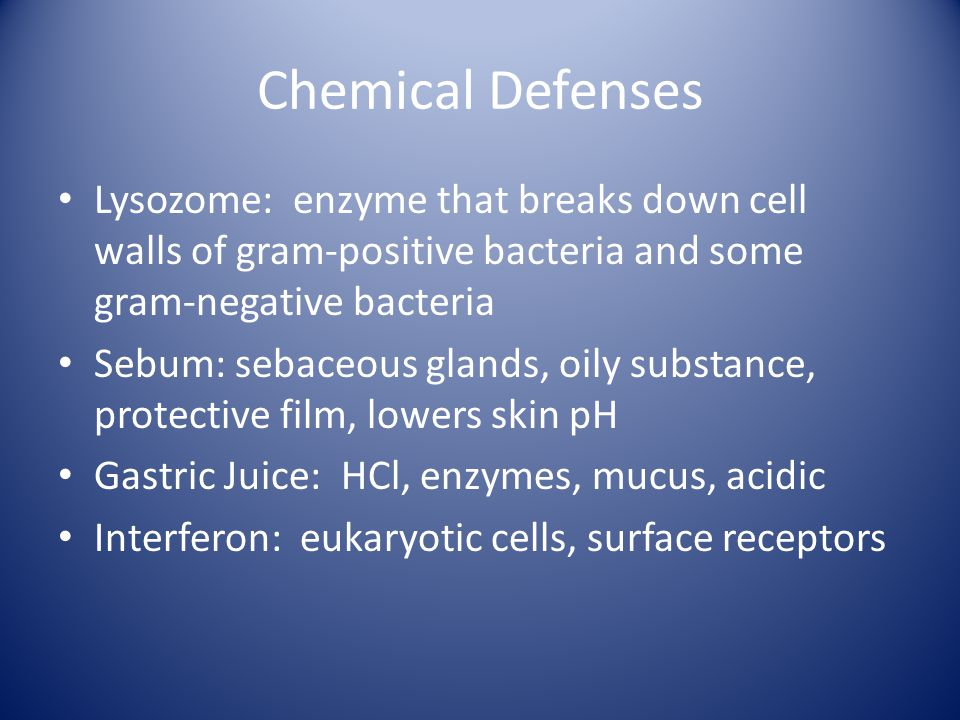 Chemical Defenses Lysozome: enzyme that breaks down cell walls of gram-positive bacteria and some gram-negative bacteria Sebum: sebaceous glands, oily substance, protective film, lowers skin pH Gastric Juice: HCl, enzymes, mucus, acidic Interferon: eukaryotic cells, surface receptors