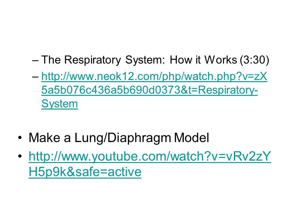 –The Respiratory System: How it Works (3:30) –http://www.neok12.com/php/watch.php?v=zX 5a5b076c436a5b690d0373&t=Respiratory- Systemhttp://www.neok12.com/php/watch.php?v=zX 5a5b076c436a5b690d0373&t=Respiratory- System Make a Lung/Diaphragm Model http://www.youtube.com/watch?v=vRv2zY H5p9k&safe=activehttp://www.youtube.com/watch?v=vRv2zY H5p9k&safe=active