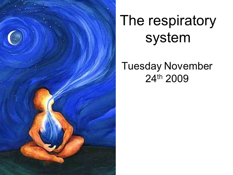 The respiratory system Tuesday November 24 th 2009