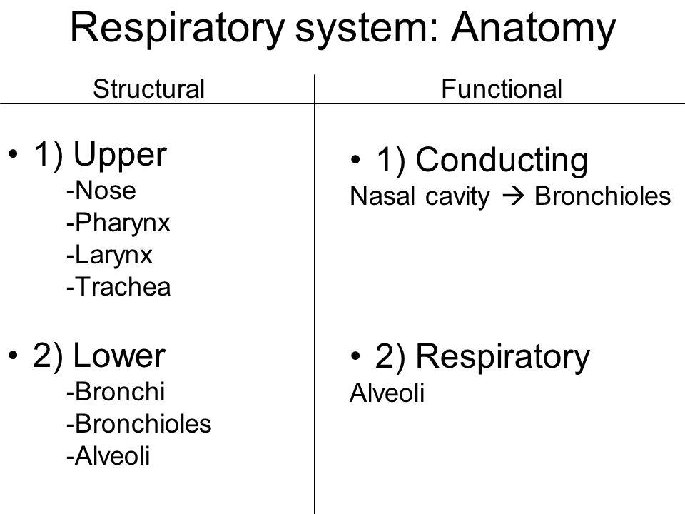 Respiratory system: Anatomy 1) Upper -Nose -Pharynx -Larynx -Trachea 2) Lower -Bronchi -Bronchioles -Alveoli 1) Conducting Nasal cavity  Bronchioles