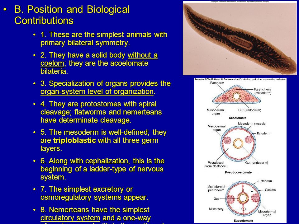 B.Position and Biological ContributionsB. Position and Biological Contributions 1.