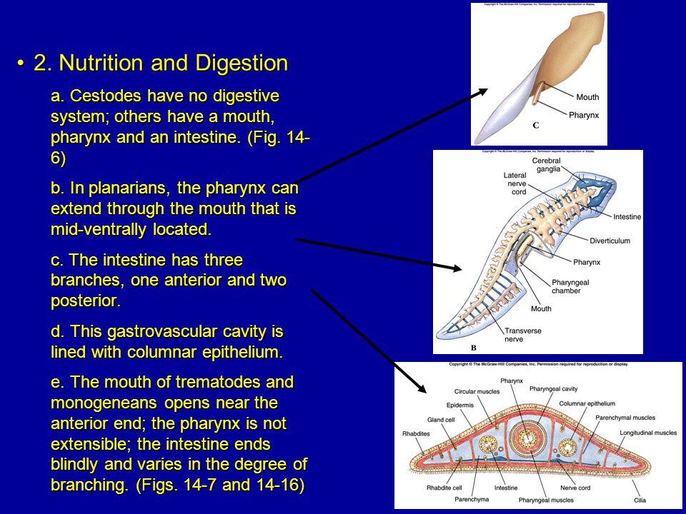 2.Nutrition and Digestion2. Nutrition and Digestion a.