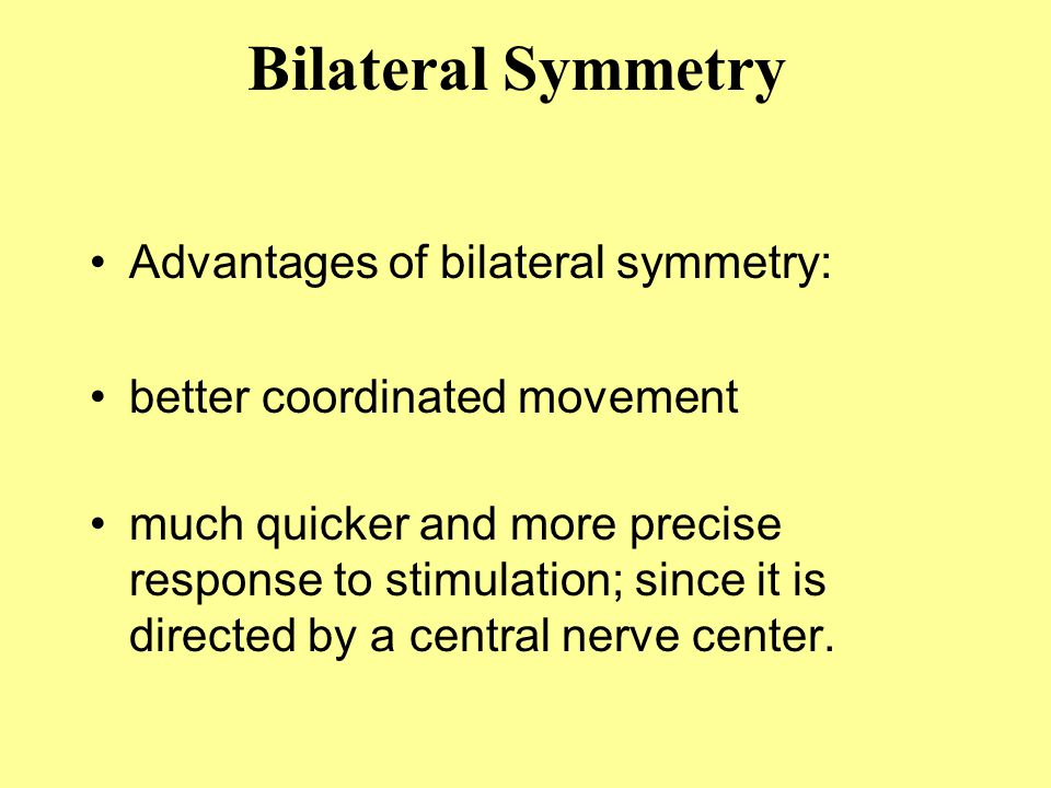 Advantages of bilateral symmetry: better coordinated movement much quicker and more precise response to stimulation; since it is directed by a central nerve center.