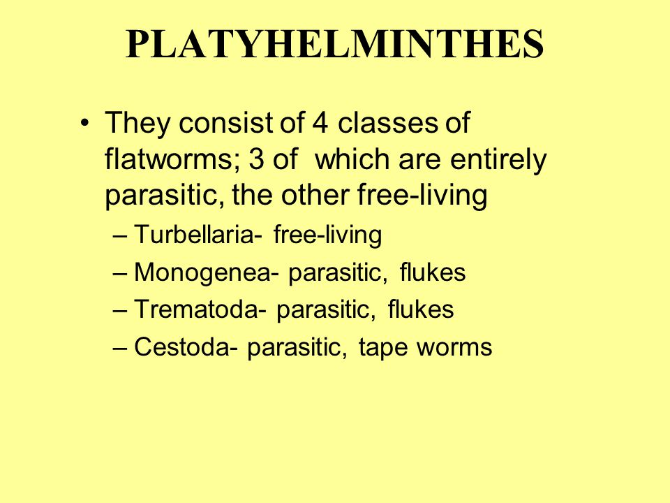 They consist of 4 classes of flatworms; 3 of which are entirely parasitic, the other free-living –Turbellaria- free-living –Monogenea- parasitic, flukes –Trematoda- parasitic, flukes –Cestoda- parasitic, tape worms PLATYHELMINTHES