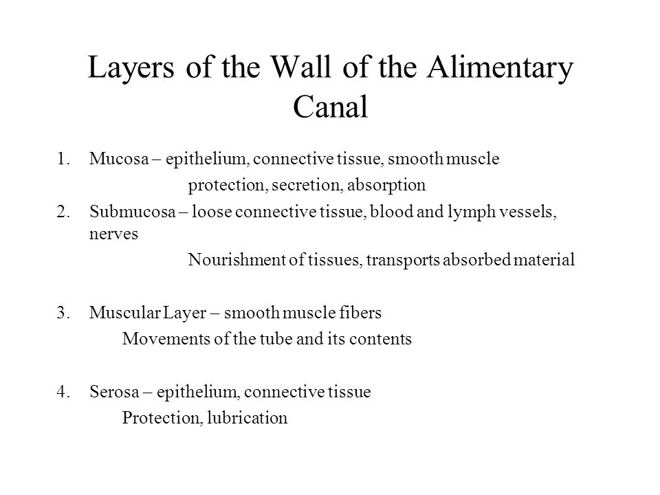Layers of the Wall of the Alimentary Canal 1.Mucosa – epithelium, connective tissue, smooth muscle protection, secretion, absorption 2.Submucosa – loose connective tissue, blood and lymph vessels, nerves Nourishment of tissues, transports absorbed material 3.Muscular Layer – smooth muscle fibers Movements of the tube and its contents 4.Serosa – epithelium, connective tissue Protection, lubrication