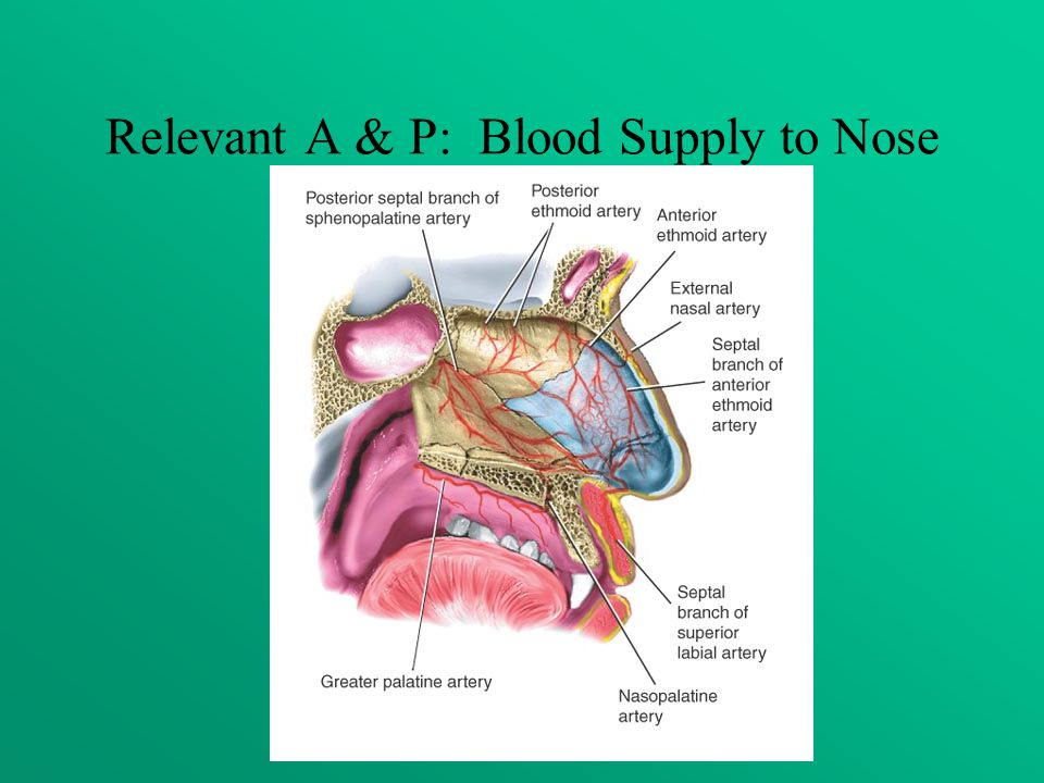 Relevant A & P: Blood Supply to Nose