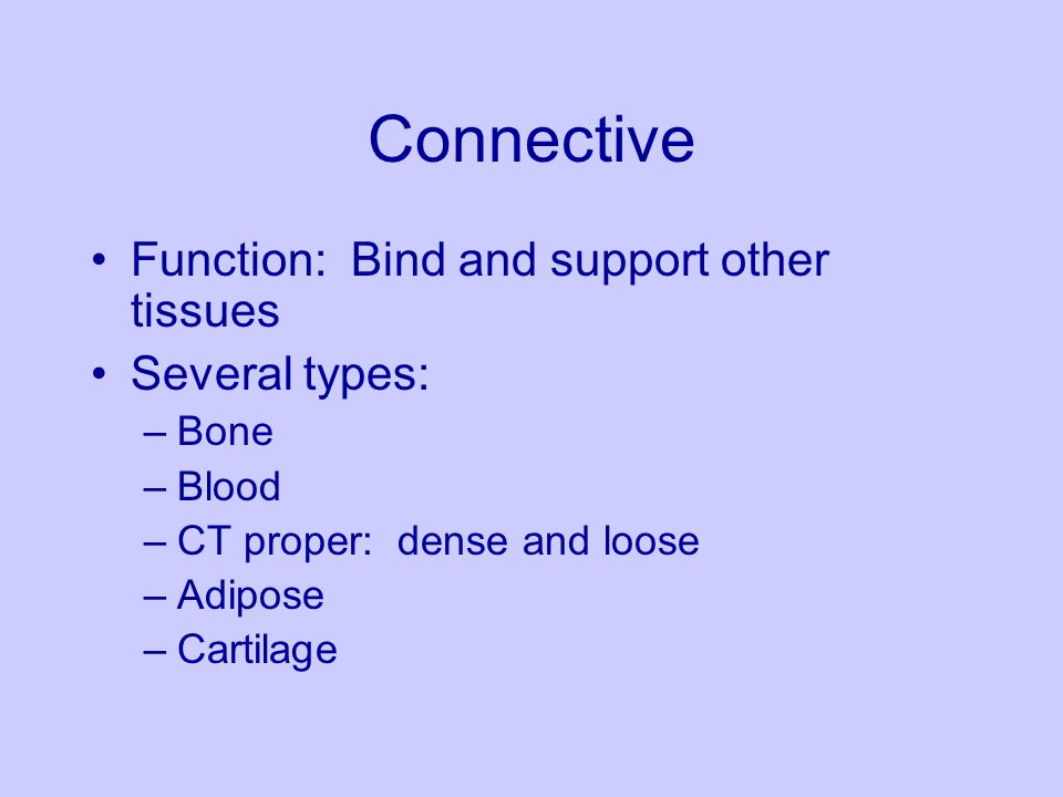Connective Function: Bind and support other tissues Several types: –Bone –Blood –CT proper: dense and loose –Adipose –Cartilage