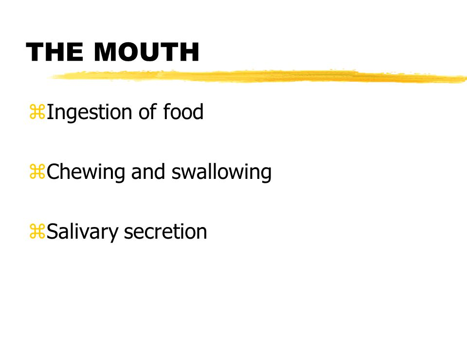 THE MOUTH zIngestion of food zChewing and swallowing zSalivary secretion