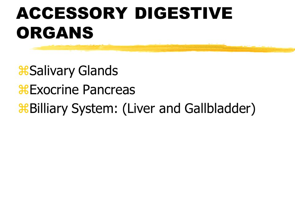 CONTROL OF DIGESTIVE SYSTEM External Influences Local Influences Receptors in Digestive Tract Intrinsic Nerve Plexuses Extrinsic Autonomic Nerves GI Hormones Smooth muscle Exocrine Gland Cells Endocrine Gland Cells