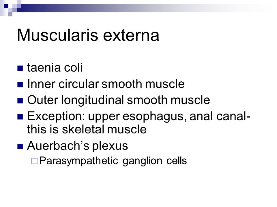 Muscularis externa taenia coli Inner circular smooth muscle Outer longitudinal smooth muscle Exception: upper esophagus, anal canal- this is skeletal
