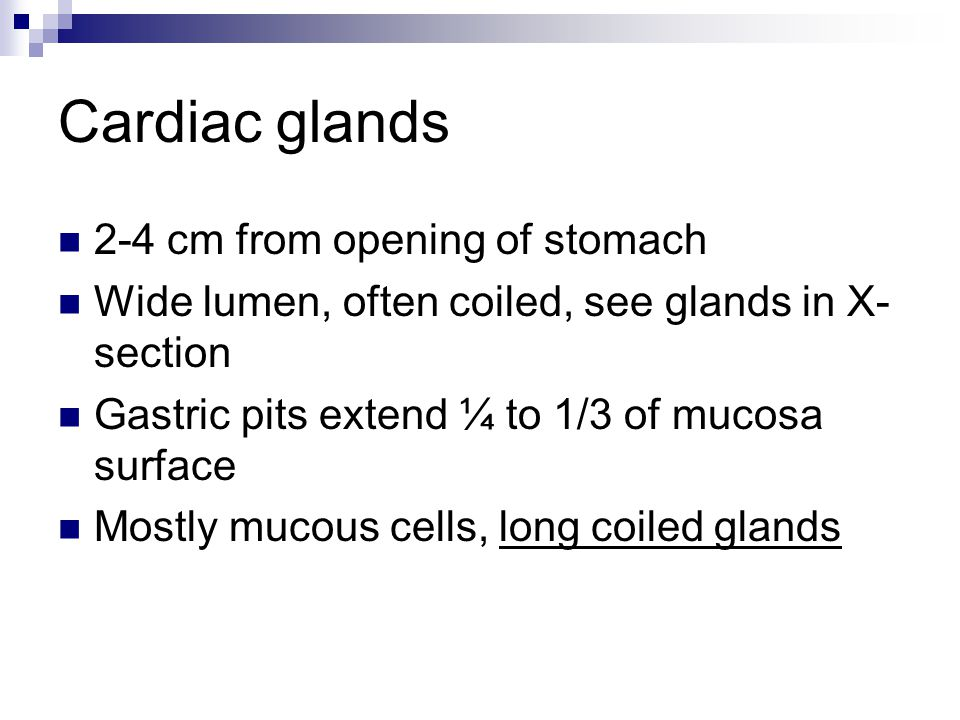 Cardiac glands 2-4 cm from opening of stomach Wide lumen, often coiled, see glands in X- section Gastric pits extend ¼ to 1/3 of mucosa surface Mostly