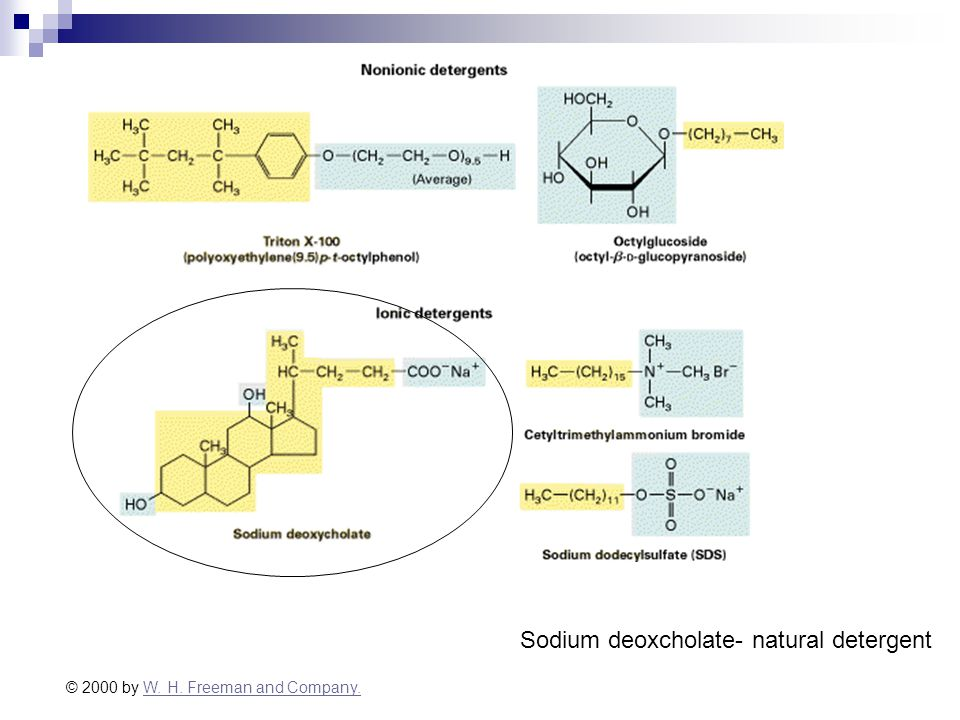 © 2000 by W. H. Freeman and Company.W. H. Freeman and Company. Sodium deoxcholate- natural detergent