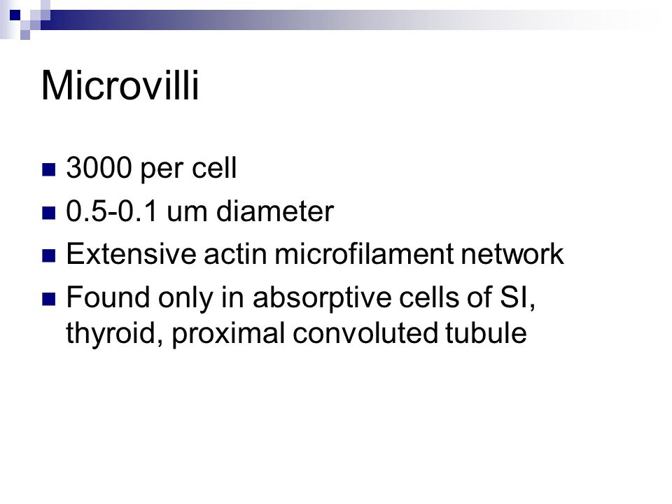 Microvilli 3000 per cell 0.5-0.1 um diameter Extensive actin microfilament network Found only in absorptive cells of SI, thyroid, proximal convoluted