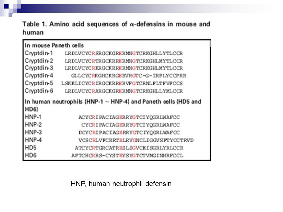 HNP, human neutrophil defensin