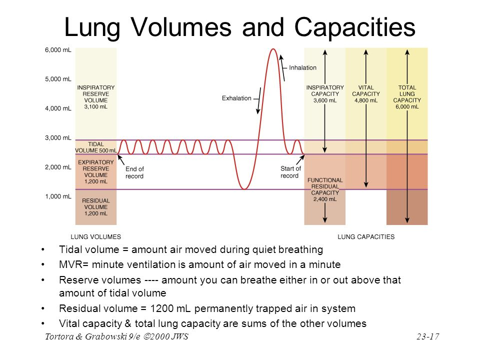 Tortora & Grabowski 9/e  2000 JWS 23-17 Tidal volume = amount air moved during quiet breathing MVR= minute ventilation is amount of air moved in a mi