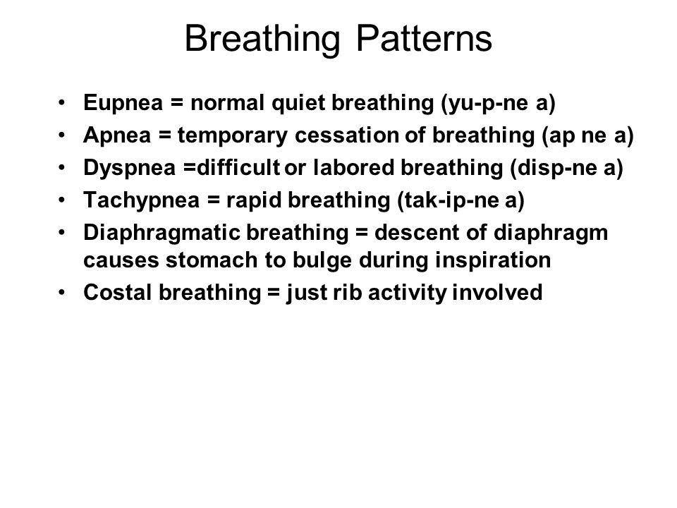 Breathing Patterns Eupnea = normal quiet breathing (yu-p-ne a) Apnea = temporary cessation of breathing (ap ne a) Dyspnea =difficult or labored breath