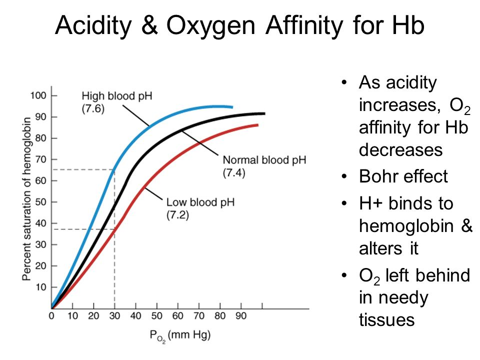 Acidity & Oxygen Affinity for Hb As acidity increases, O 2 affinity for Hb decreases Bohr effect H+ binds to hemoglobin & alters it O 2 left behind in