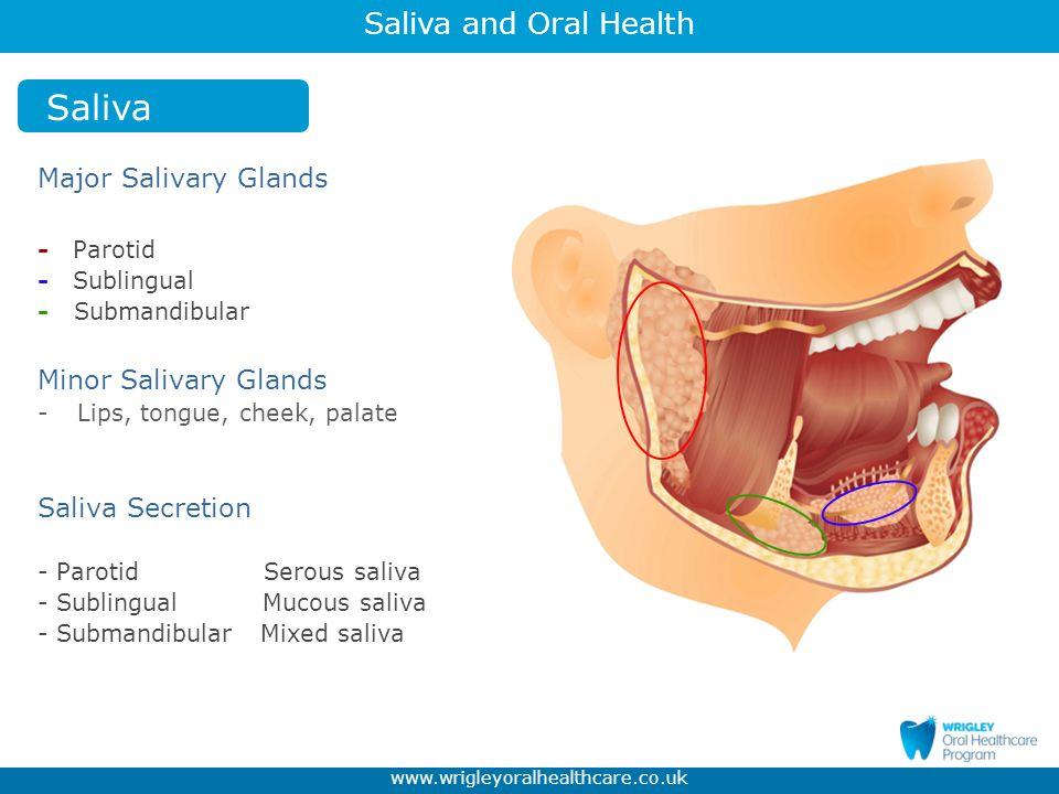 Saliva and Oral Health www.wrigleyoralhealthcare.co.uk Saliva Salivary Acini Basic secretory units of salivary glands.