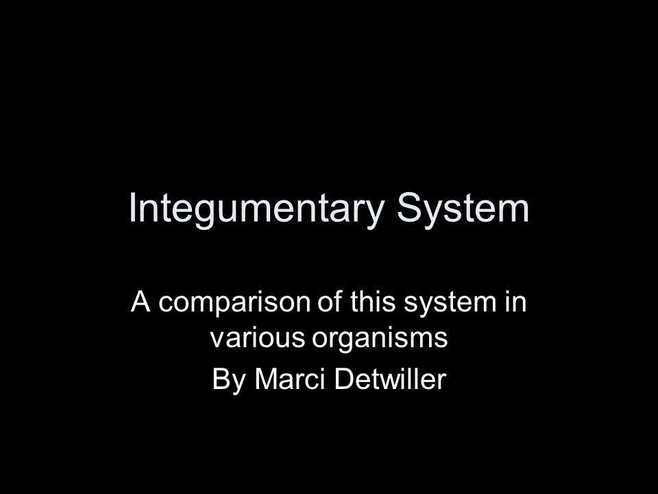 Integumentary System A comparison of this system in various organisms By Marci Detwiller
