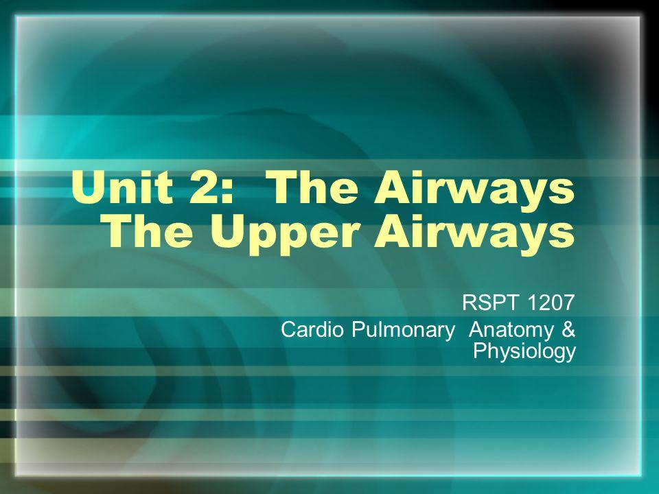 Unit 2: The Airways The Upper Airways RSPT 1207 Cardio Pulmonary Anatomy & Physiology