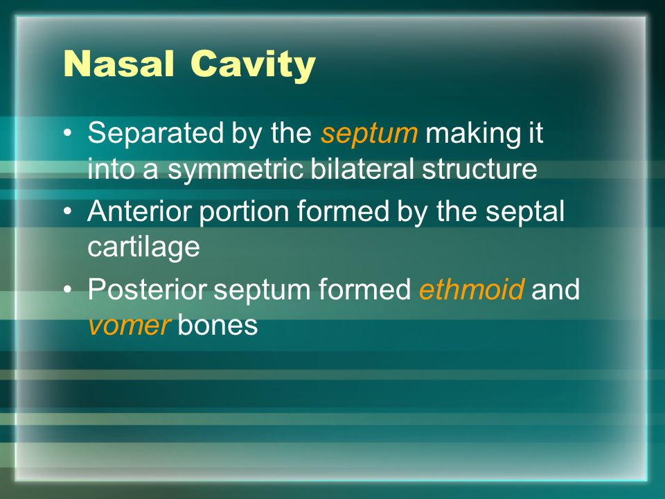 Nasal Cavity External nares – (nostrils) the openings of the nasal passageway Internally protected from particles by Vibrissae (nose hairs) Immediately behind vibrissae is an open chamber called the vestibule