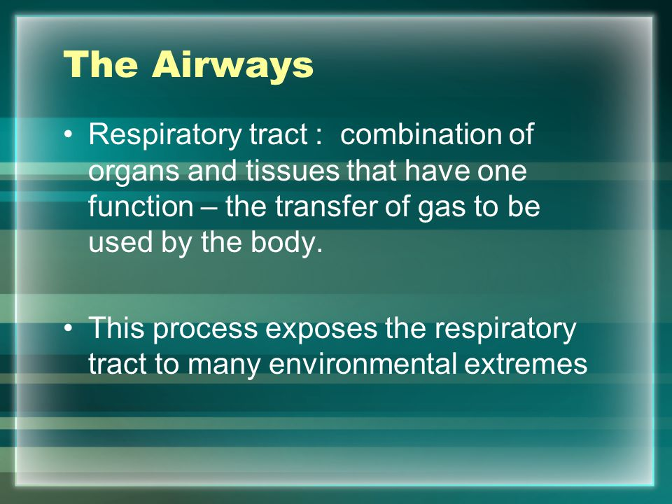 The Upper Airways Consists of: –The nose –Oral cavities –The pharynx –The larynx