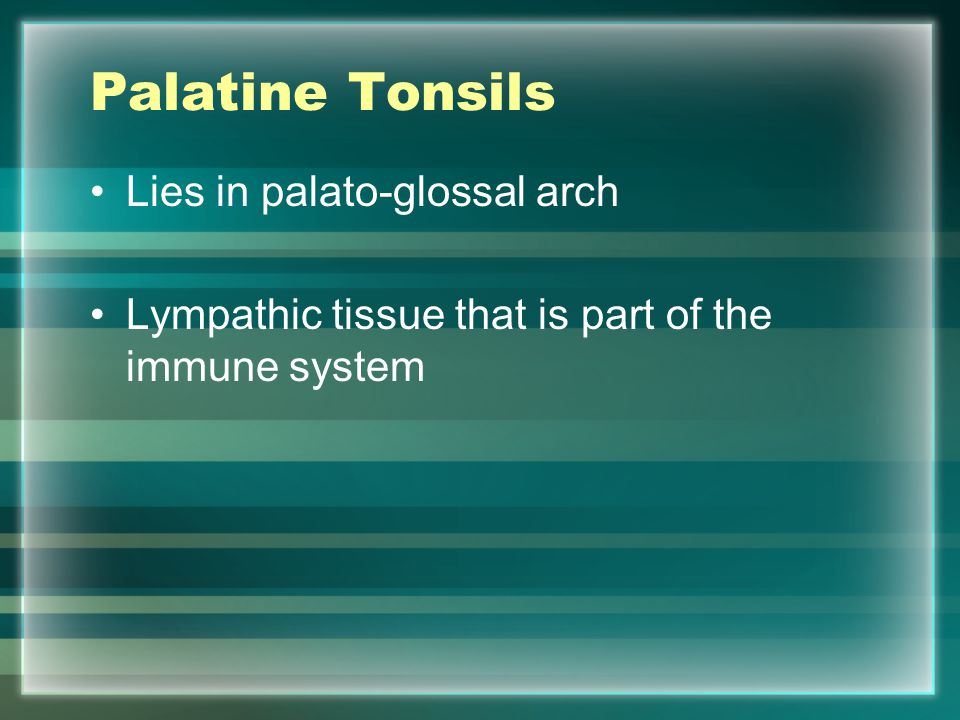 Palatine Tonsils Lies in palato-glossal arch Lympathic tissue that is part of the immune system