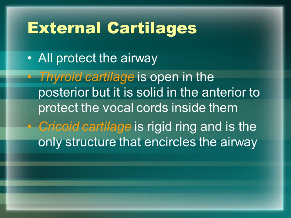 External Cartilages All protect the airway Thyroid cartilage is open in the posterior but it is solid in the anterior to protect the vocal cords insid