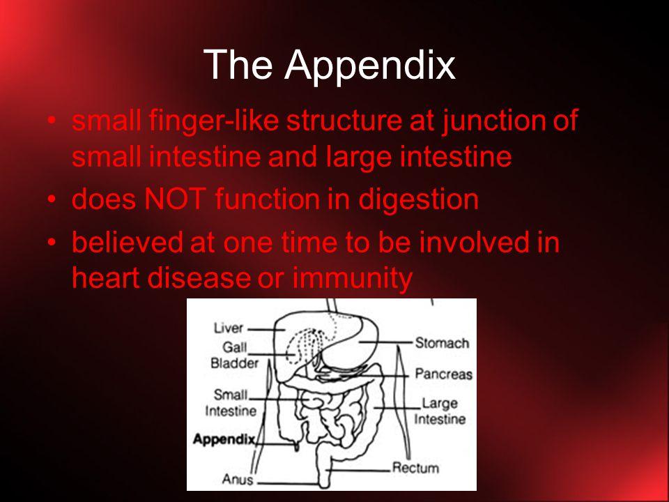 Regulation of Digestion 1.Sensory and Nervous Stimuli: Respond to taste, sight, smell, etc.