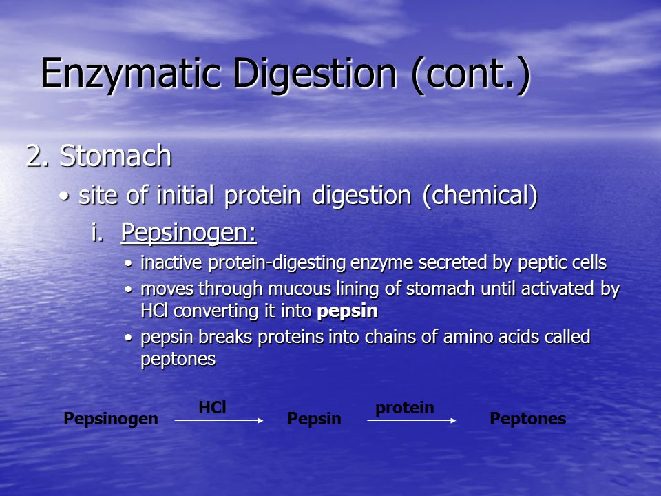Enzymatic Digestion (cont.) 2.Stomach (cont.) ii.
