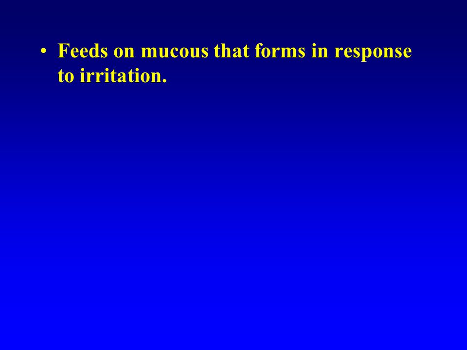 Feeds on mucous that forms in response to irritation.
