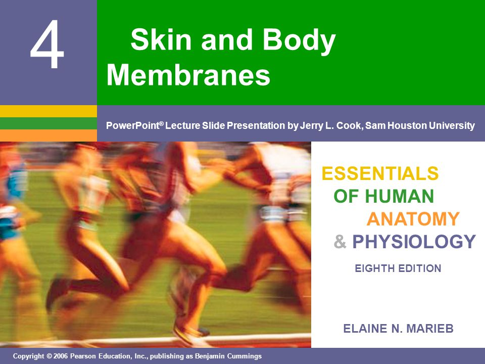 ELAINE N. MARIEB EIGHTH EDITION 4 Copyright © 2006 Pearson Education, Inc., publishing as Benjamin Cummings PowerPoint ® Lecture Slide Presentation by
