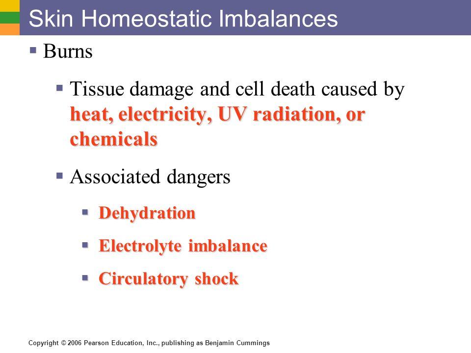 Copyright © 2006 Pearson Education, Inc., publishing as Benjamin Cummings Skin Homeostatic Imbalances  Burns heat, electricity, UV radiation, or chem