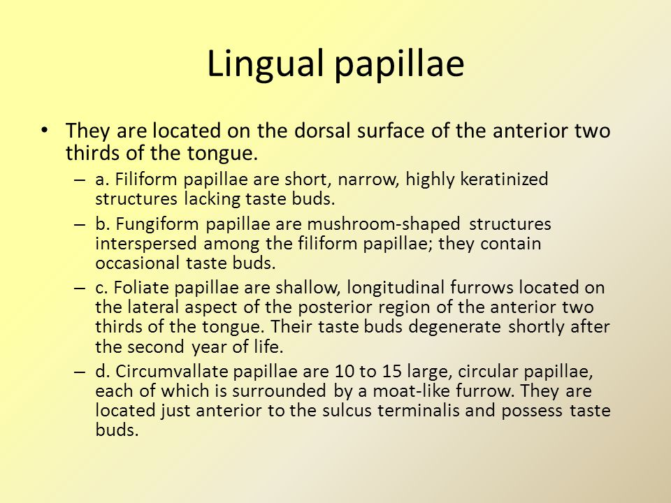 Lingual papillae They are located on the dorsal surface of the anterior two thirds of the tongue. – a. Filiform papillae are short, narrow, highly ker
