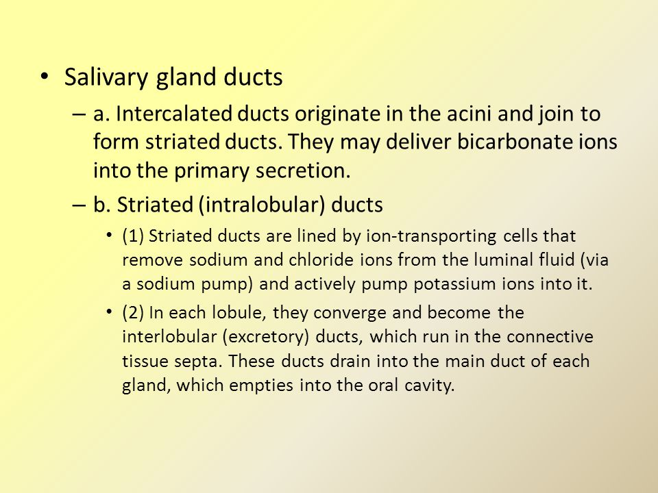 Salivary gland ducts – a. Intercalated ducts originate in the acini and join to form striated ducts. They may deliver bicarbonate ions into the primar