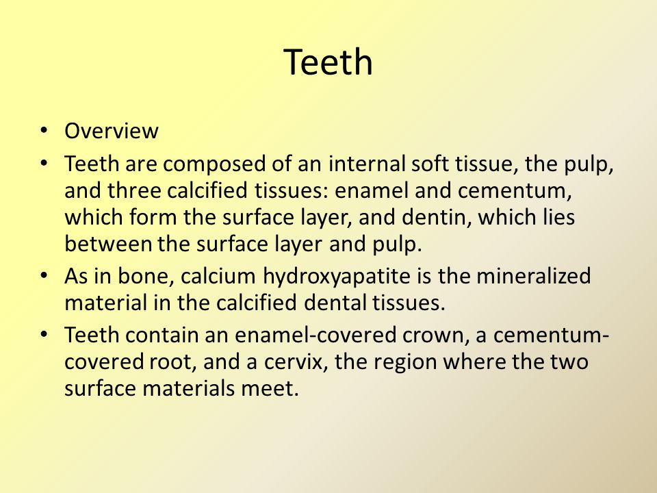 Teeth Overview Teeth are composed of an internal soft tissue, the pulp, and three calcified tissues: enamel and cementum, which form the surface layer