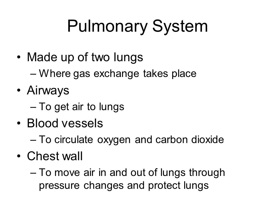 Pulmonary System Made up of two lungs –Where gas exchange takes place Airways –To get air to lungs Blood vessels –To circulate oxygen and carbon dioxi