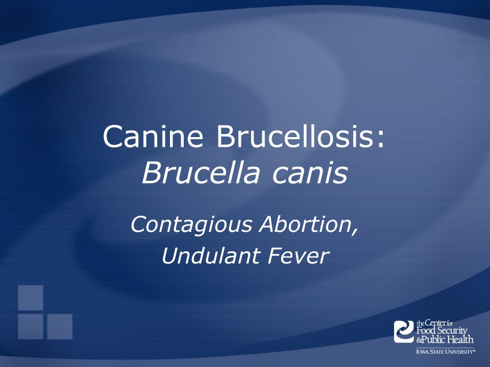 Canine Brucellosis: Brucella canis Contagious Abortion, Undulant Fever