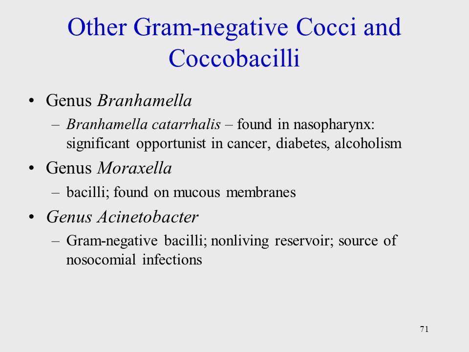 71 Other Gram-negative Cocci and Coccobacilli Genus Branhamella –Branhamella catarrhalis – found in nasopharynx: significant opportunist in cancer, di