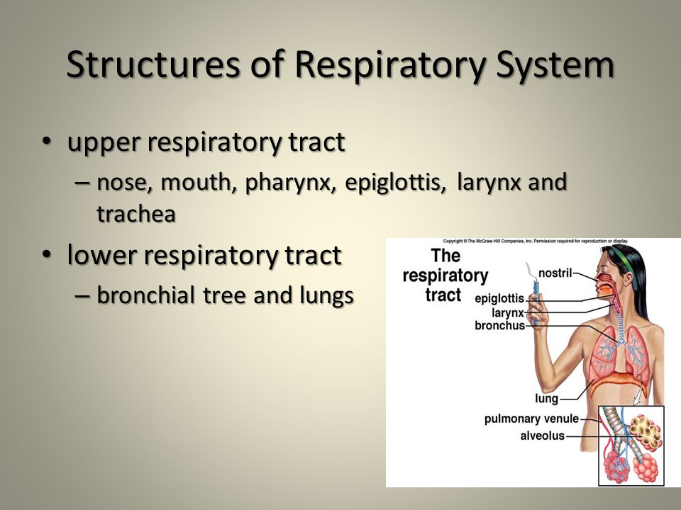 Structures of Respiratory System upper respiratory tract upper respiratory tract – nose, mouth, pharynx, epiglottis, larynx and trachea lower respiratory tract lower respiratory tract – bronchial tree and lungs