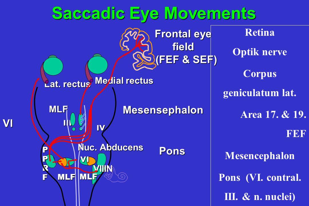 ıv ıv ııı PPRF Lat. rectus Medial rectus VIIIN Pons Pons Mesensephalon MLF vı MLF MLF Nuc. Abducens Frontal eye field (FEF & SEF) (FEF & SEF) Saccadic