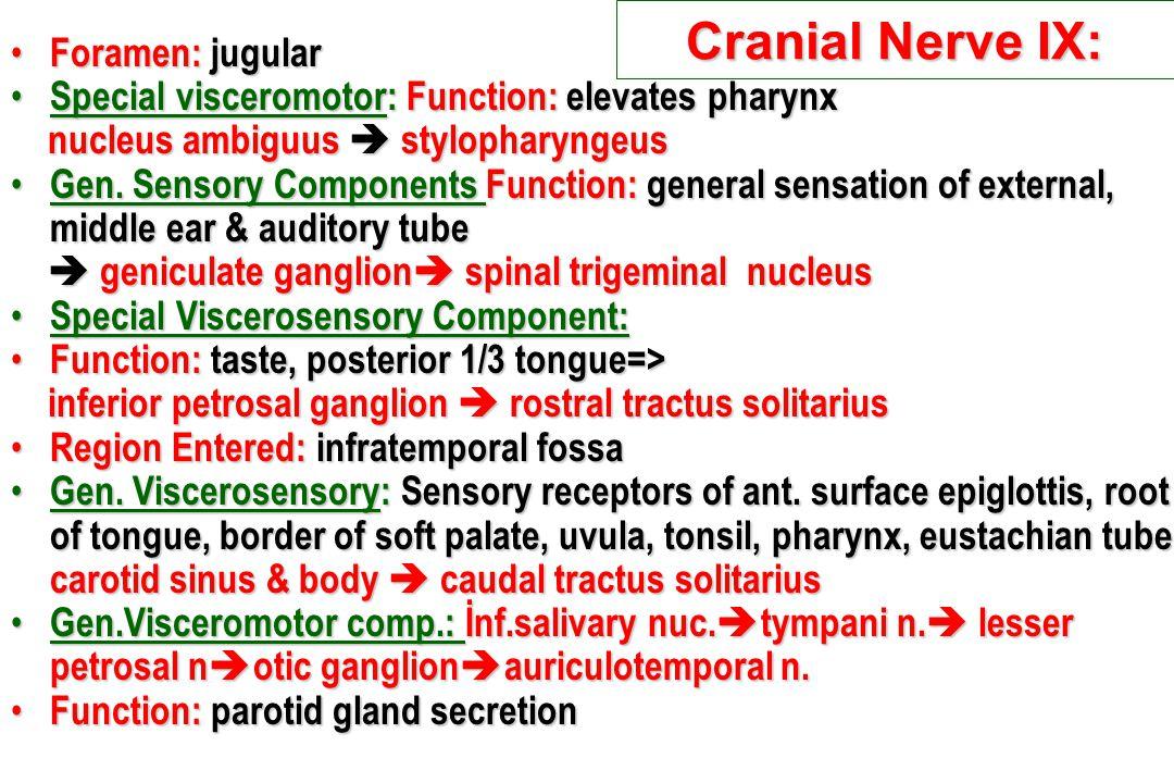Cranial Nerve IX: Foramen: jugular Foramen: jugular Special visceromotor: Function: elevates pharynx Special visceromotor: Function: elevates pharynx