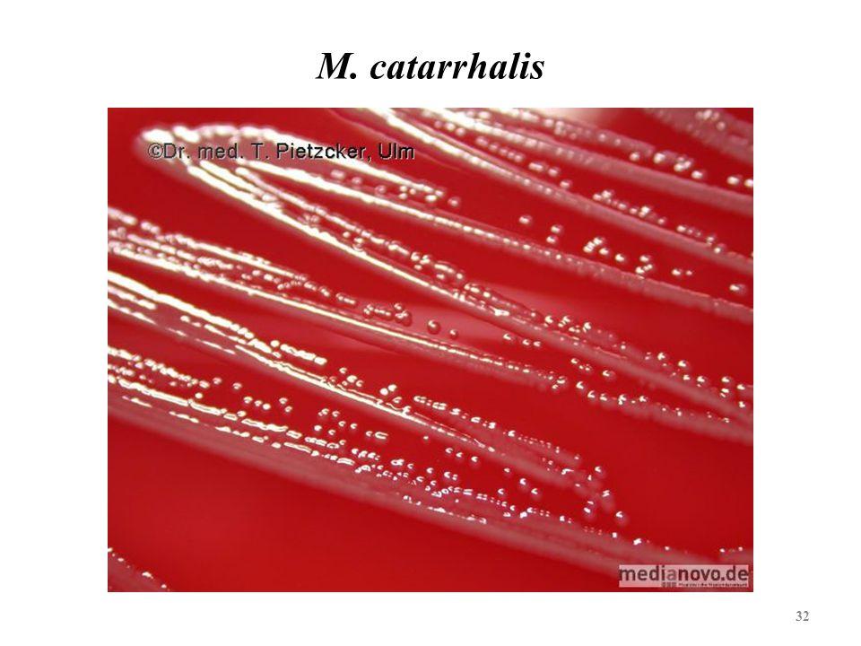 32 M. catarrhalis