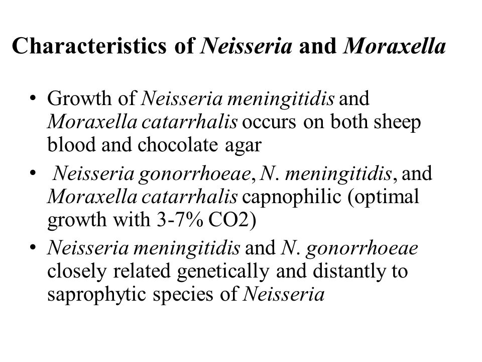 Neisseria: Modes of Infection Neisseria meningitidis can be transmitted by sexual contact, especially orogenital or anogenital intercourse.