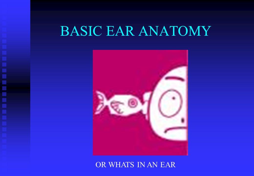 BASIC EAR ANATOMY OR WHATS IN AN EAR