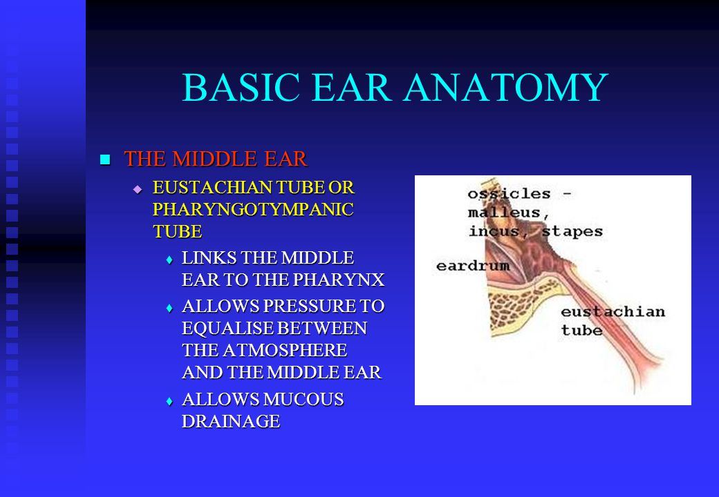 BASIC EAR ANATOMY THE MIDDLE EAR THE MIDDLE EAR  EUSTACHIAN TUBE OR PHARYNGOTYMPANIC TUBE  LINKS THE MIDDLE EAR TO THE PHARYNX  ALLOWS PRESSURE TO EQUALISE BETWEEN THE ATMOSPHERE AND THE MIDDLE EAR  ALLOWS MUCOUS DRAINAGE