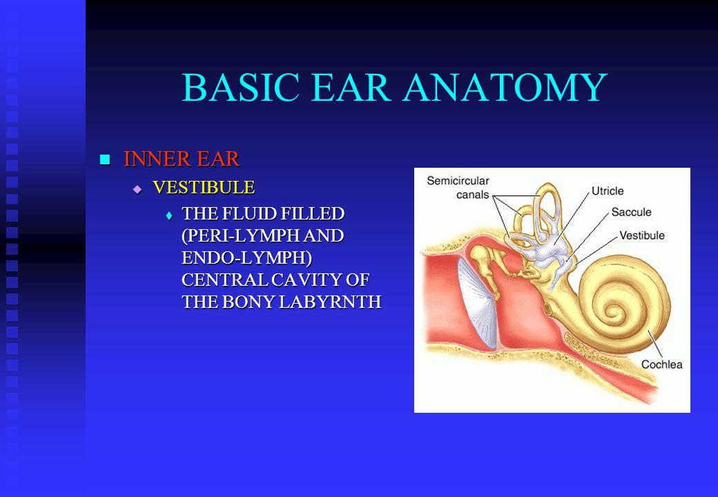 BASIC EAR ANATOMY INNER EAR INNER EAR  VESTIBULE  THE FLUID FILLED (PERI-LYMPH AND ENDO-LYMPH) CENTRAL CAVITY OF THE BONY LABYRNTH
